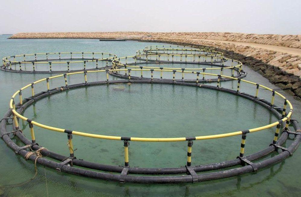 مجتمع ۵۰۰تنی تکثیر و پرورش ماهی در کوهستک سیریک راه اندازی می شود