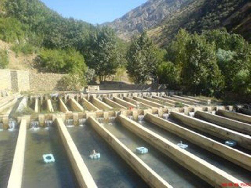 ۱.۳ میلیارد ریال به امکان سنجی طرح های آبزی پروری اختصاص یافت