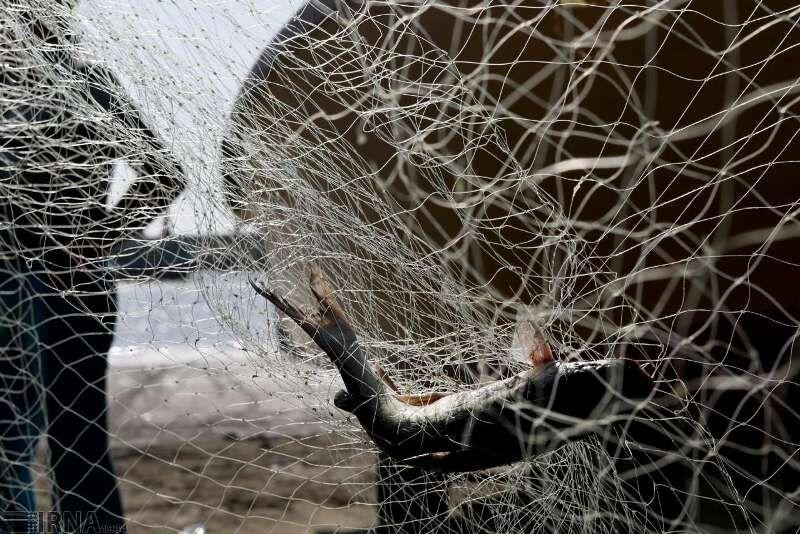 کاهش ۲۰ درصدی صید ضمنی و دورریز آبزیان توسط صیادان