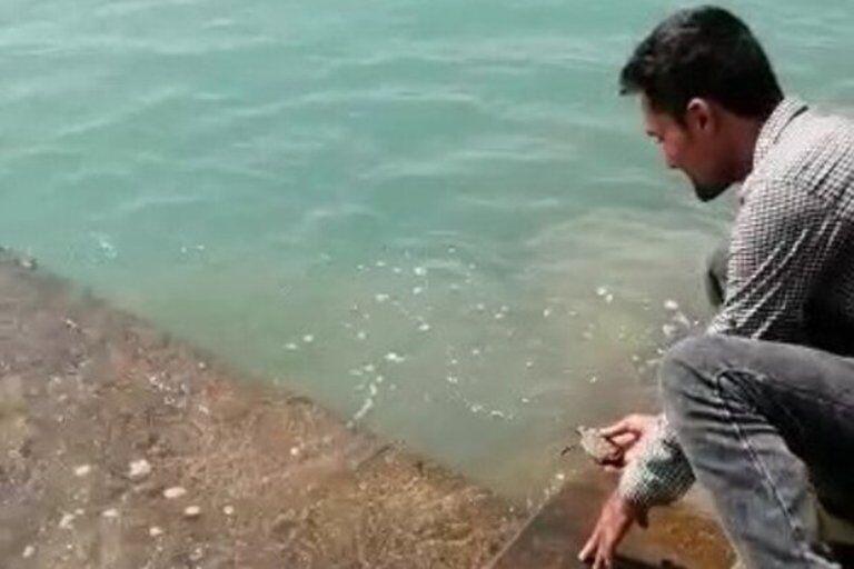 یک قطعه نوزاد لاک پشت پوزه عقابی در ساحل بندرریگ گناوه رهاسازی شد