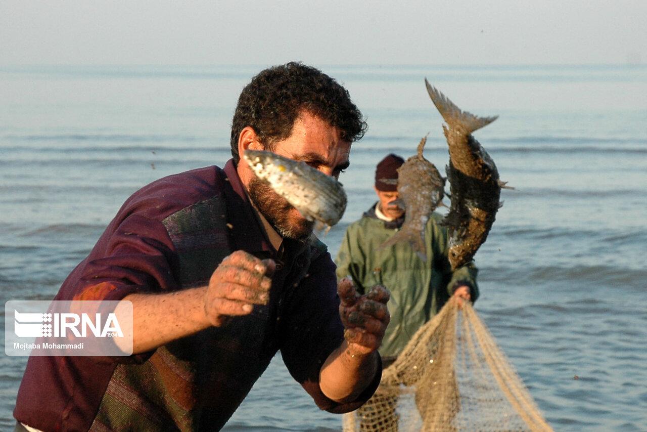 ۲۵۰۰ نفر در صنعت پرورش آبزیان آذربایجان غربی اشتغال دارند