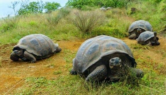 زمان مهاجرت لاکپشتها تحت تاثیر تغییرات آب و هوایی نیست