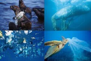جانوران دریایی اسیر آلودگی پلاستیکی دریاها و اقیانوسها و زیستگاههای دریایی
