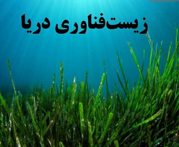 تجاریسازی محصولات زیست فناوری دریا و جلبک