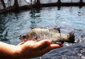 پرورش ماهی در قفس و آبزیپروری