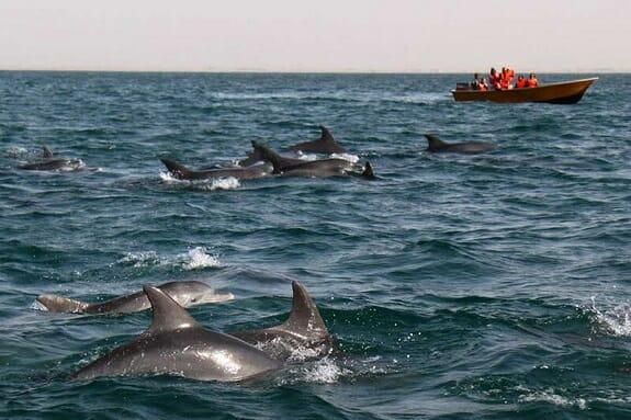 دلفینهای خلیج گواتر چابهار