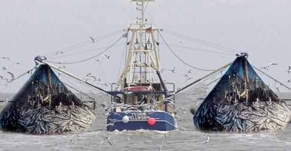 صید ترال