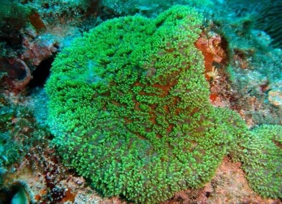 سایه ویرانگر گرد و غبار بر روی آبسنگهای مرجانی