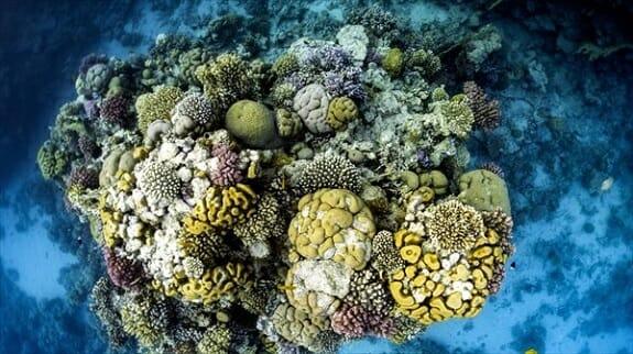بخش زیادی از مرجانهای خلیج فارس از بین رفته است