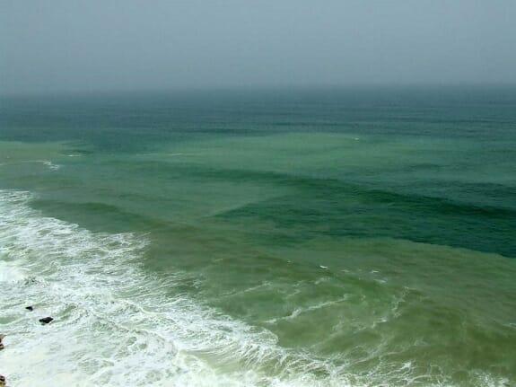 احتمال خطر تلفات آبزیان با رؤیت شکوفایی جلبکی در دریابزرگ چابهار
