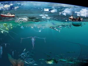 معرفی رشته زیست شناسی دریا