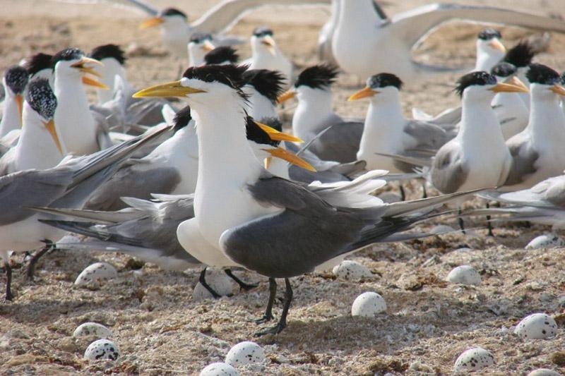 زیستگاه ساحلی حیات مُند برای پرندگان دریایی در بندر دیر