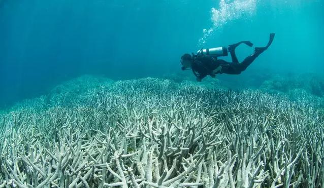 وبینار غواصی و محیط زیست دریایی برگزار می شود