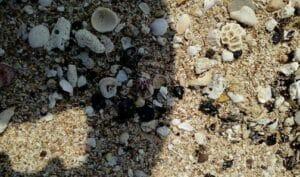 لکههای نفتی در سواحل و آب های جزیره هنگام در خلیجفارس