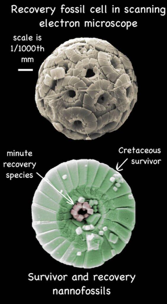 پوستههای کلسیتی میکروپلانکتونها دریایی