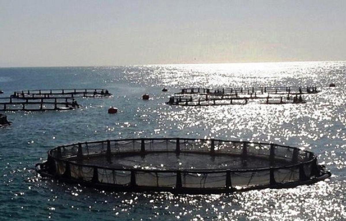 ظرفیت آبزیپروری دریایی گیلان بالغ بر ۷۵ هزار تن است