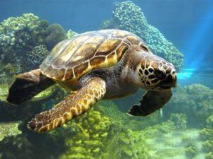 سمپوزیوم ملی حفاظت از لاک پشت های دریایی چابهار