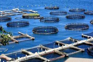 فراخوانی برای حمایت از تولید محصولات زیستفناورانه دریایی
