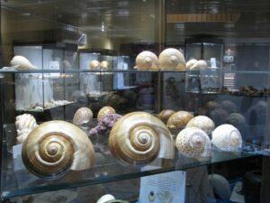 موزه صدف ناژوان نمایش نادرترین گونه های دریایی