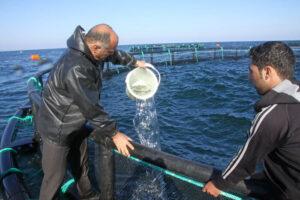 پرورش ماهی درقفس طرحی برای تنفس دریا