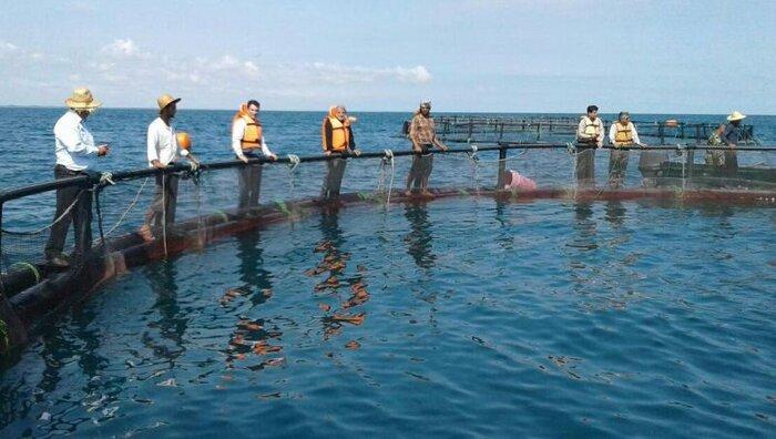 ۵۰هزارتن به ظرفیت تولید ماهی پرورشی هرمزگان اضافه می شود