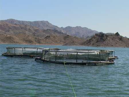 لرستان پتانسیل تولید بیش از ۱۰۰ هزار تن انواع آبزیان را دارد