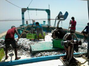 تخلیه صید ماهی و آبزیان لنج های آب های دور