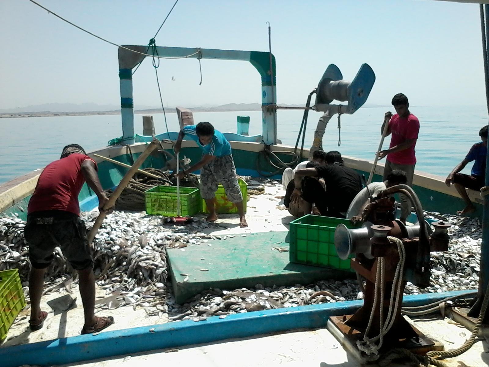 تخلیه صید لنج های آبهای دور در سیریک