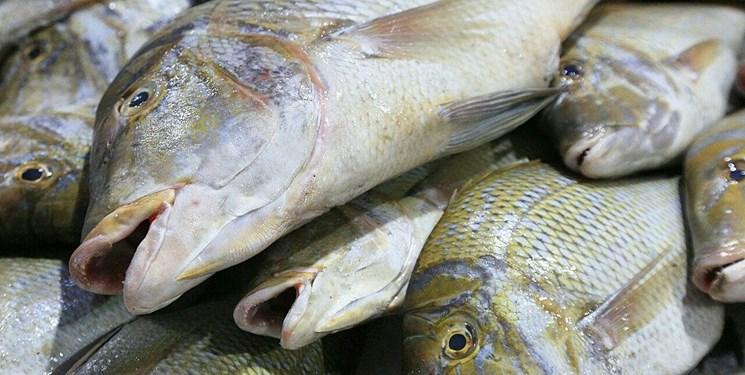 شیلات و ماهی مازندران