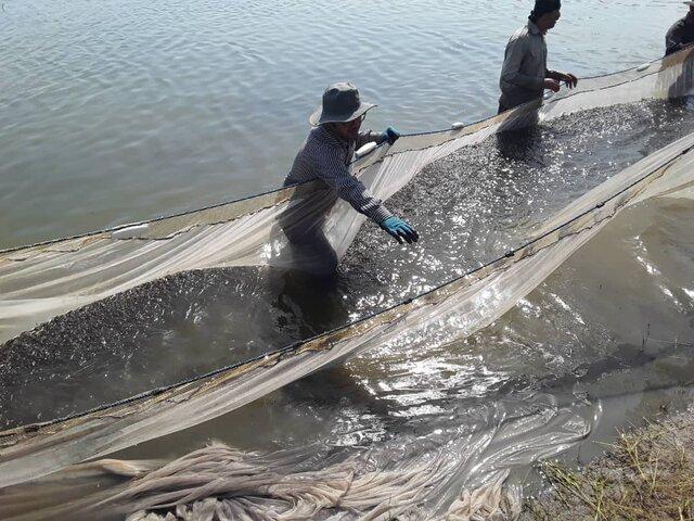 وضعیت اسفبار صید پره در مازندران!