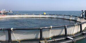 پرورش ماهی در قفس