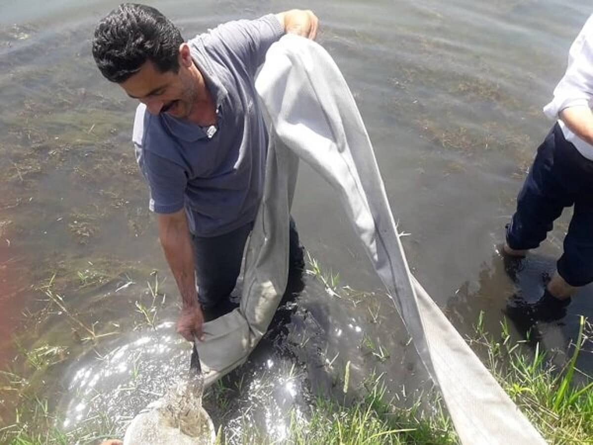 رهاسازی بچه ماهی در منابع آبی بندر خرمشهر