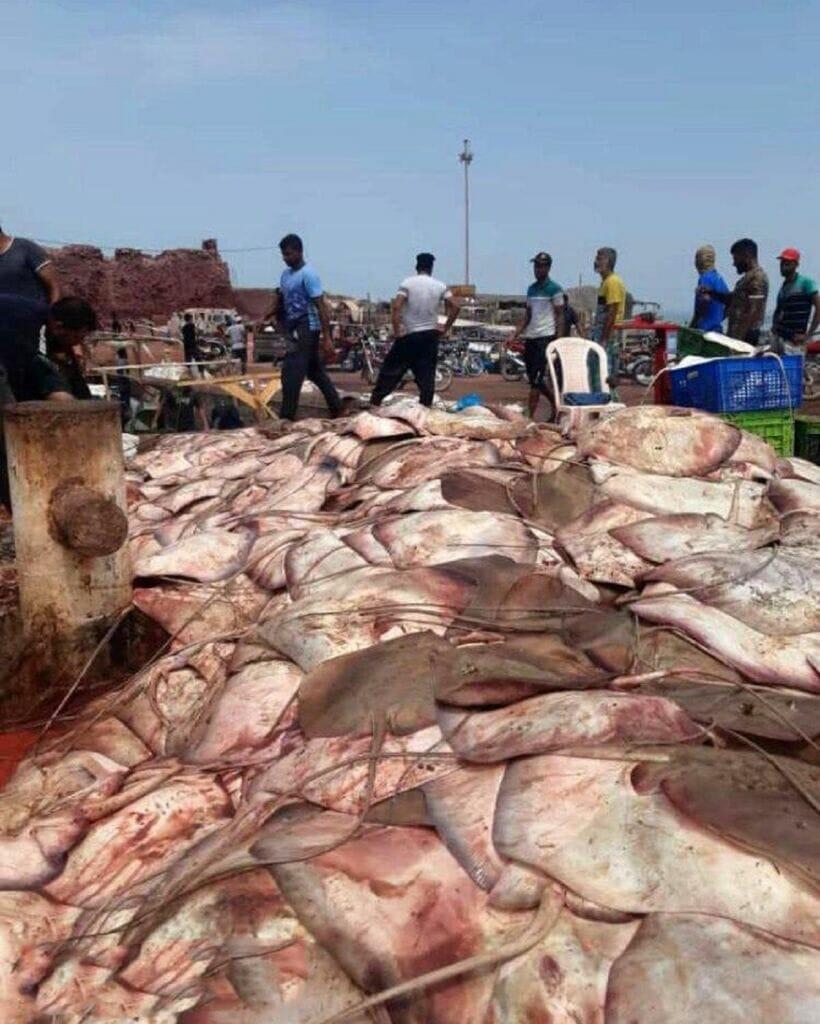 سفره ماهی صید شده در جزیره هرمز