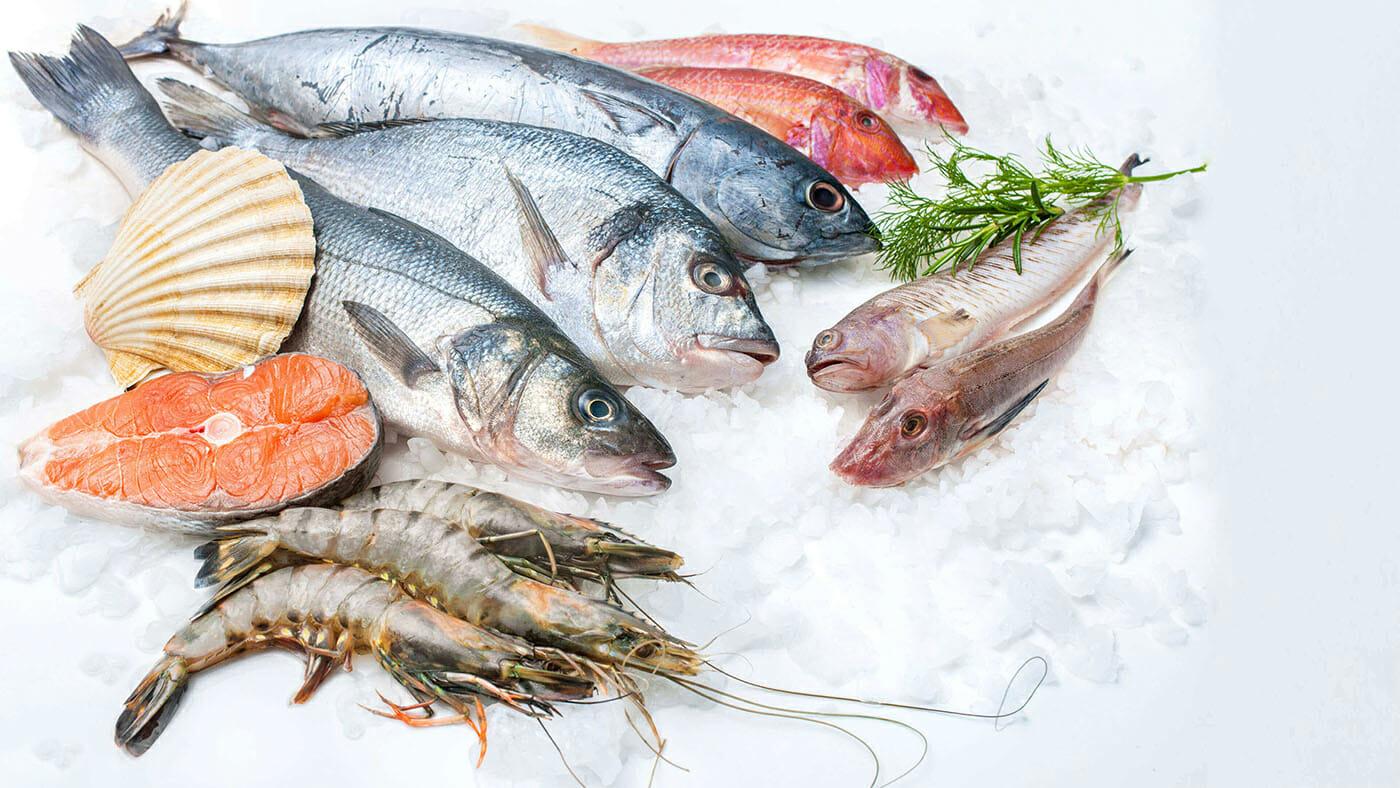 ماهی و میگو از سفره ساحلنشینان بوشهر حذف شد