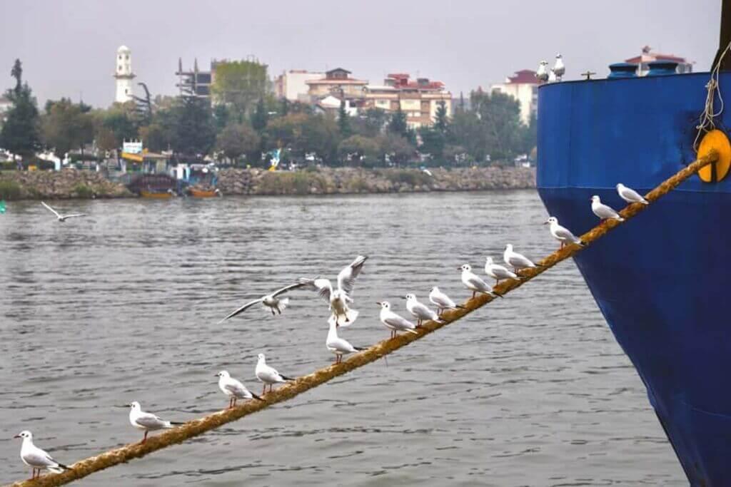 پرندگان دریایی بر روی طناب لنگر کشتی در اسکله بندر انزلی