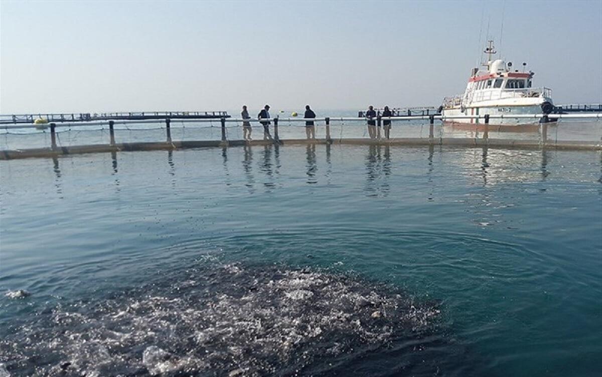 تولید ماهی پرورشی در استان بوشهر به ۴۰۰۰ تن در سال رسید