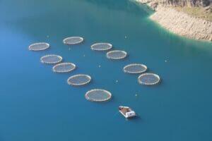 پرورش ماهی در قفس در سد کارون
