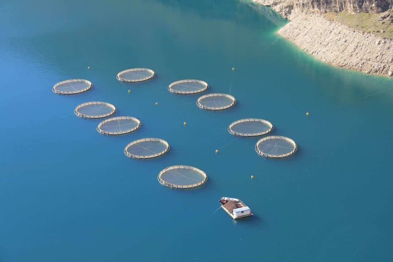 پرورش ماهی در قفس جزو طرح های اقتصادی مقاومتی است