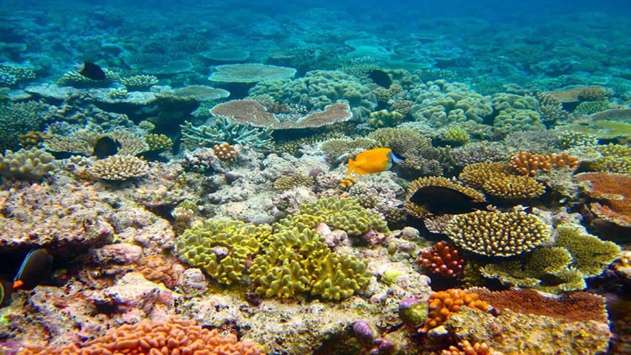 وضعیت آبسنگهای مرجانی خلیج فارس مساعد نیست
