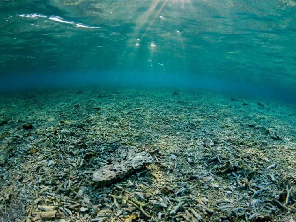 تخریب زیست محیطی بستر و کف اقیانوسها
