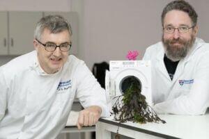 تولید پودر شوینده حافظ محیط زیست از جلبک دریایی