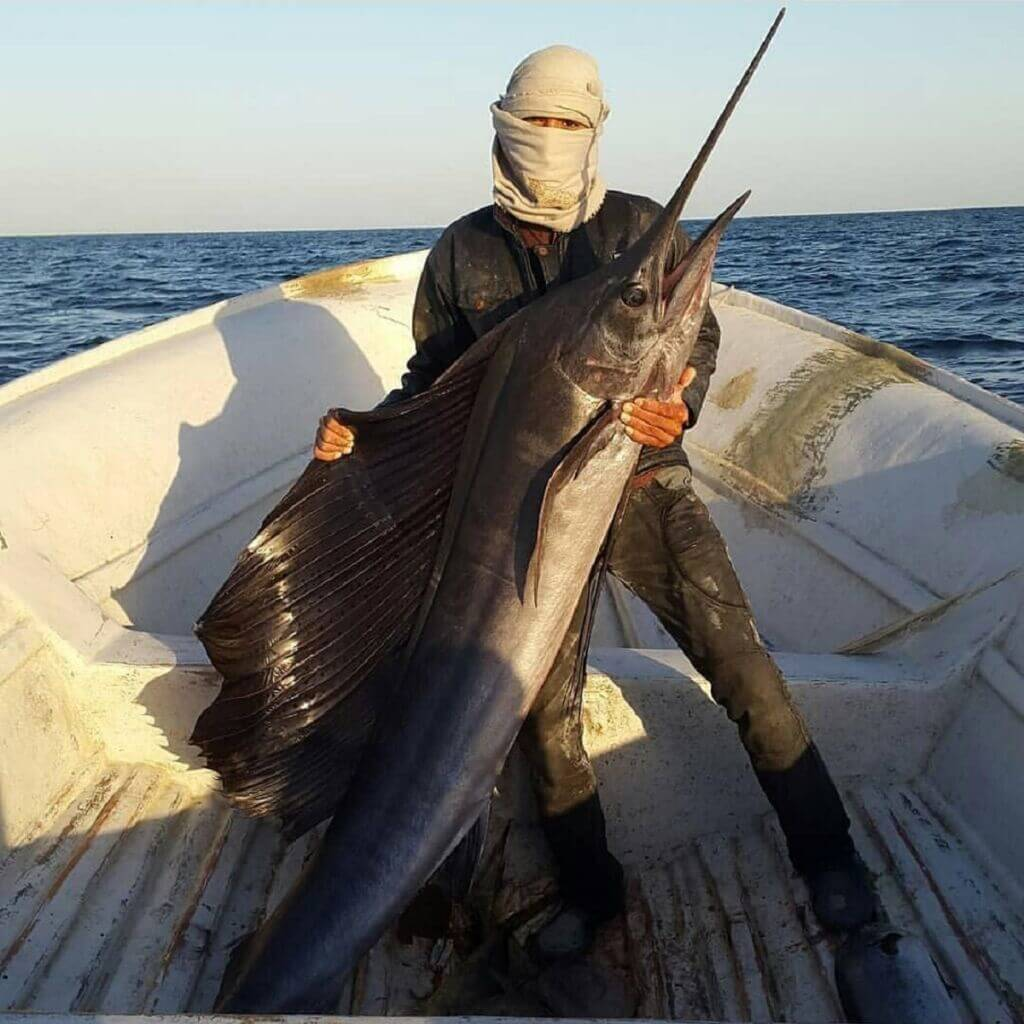 صید نیزه ماهی(بادبان ماهی-ماهی مارلین) توسط صیادان بوشهری