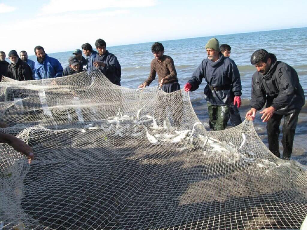 صید پره ماهیان استخوانی در سواحل جنوبی دریای کاسپین در شمال کشور