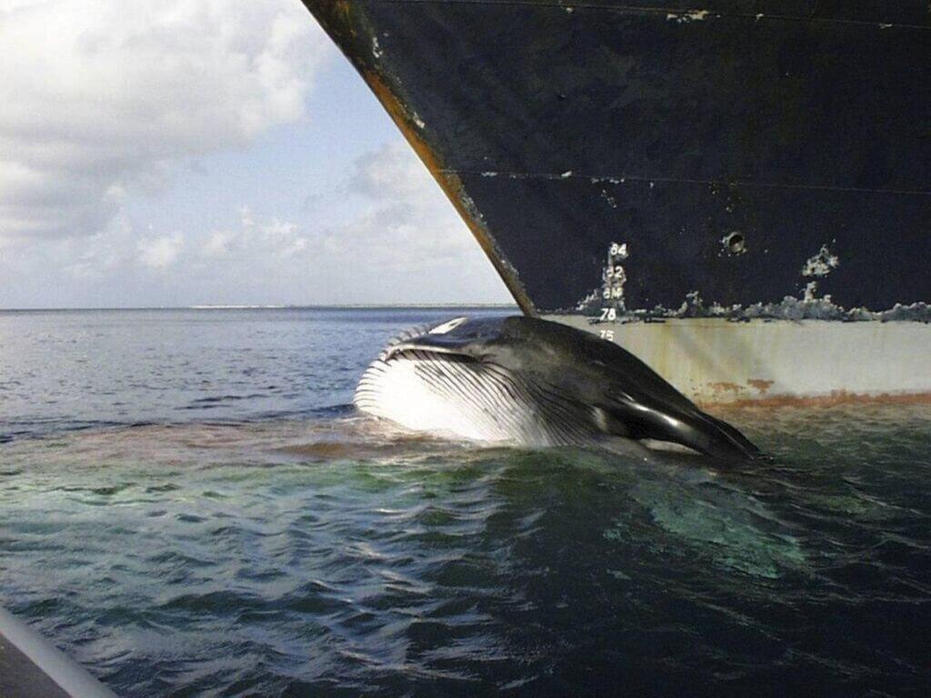 برخورد نهنگ آبی با کشتی