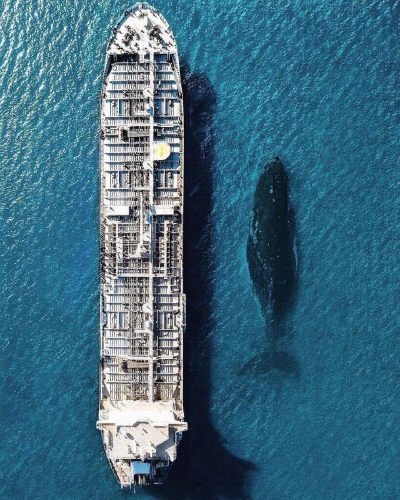 نهنگ آبی در کنار کشتی تانکر نفتکش