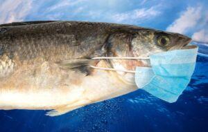 ویروس کرونا در ماهی و آبزیان