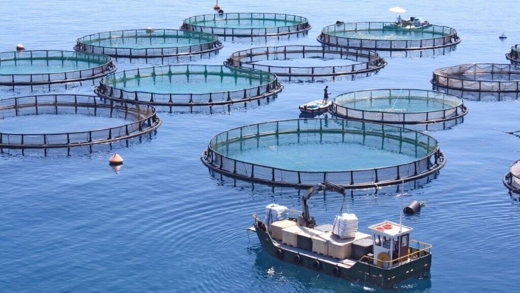 صنعت پرورش ماهی در قفس