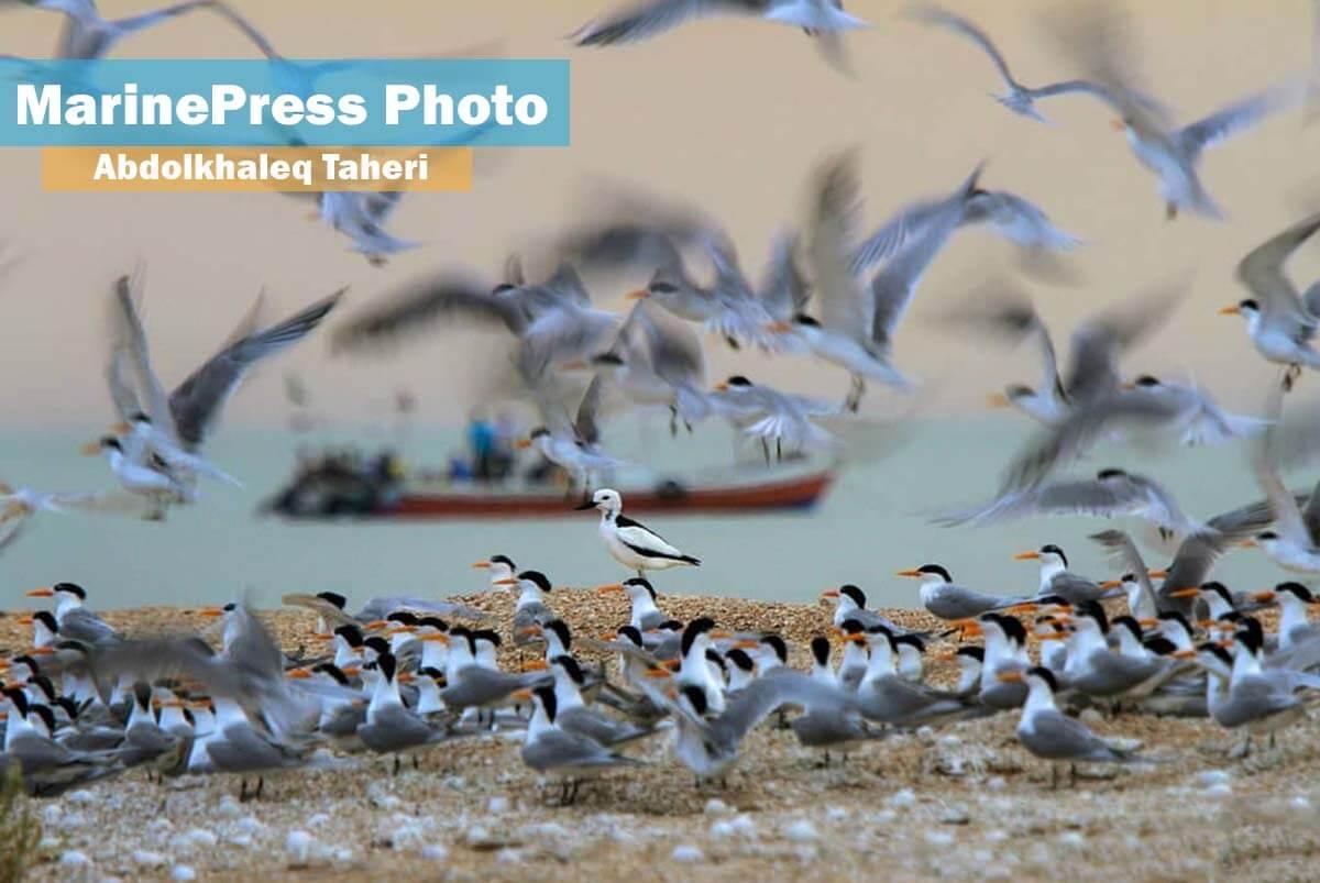 جزیره نخیلو بهشت پرندگان