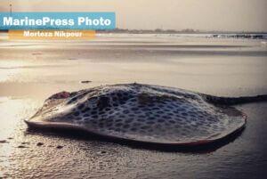 سفره ماهی ساحل بندر کنگان بوشهر در مجاورت خلیجفارس