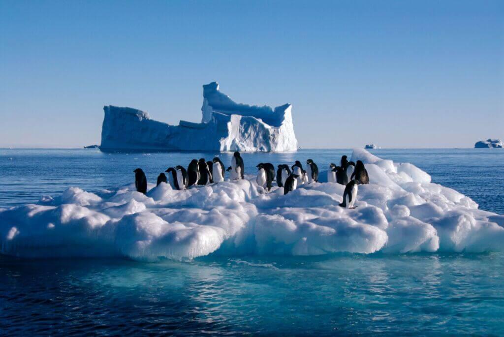 پنگوئن بر روی یخ های قطب جنوب در حال آب شدن در اقیانوس